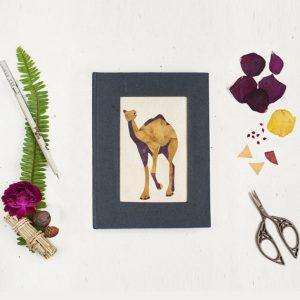 Captivating Camel Diary